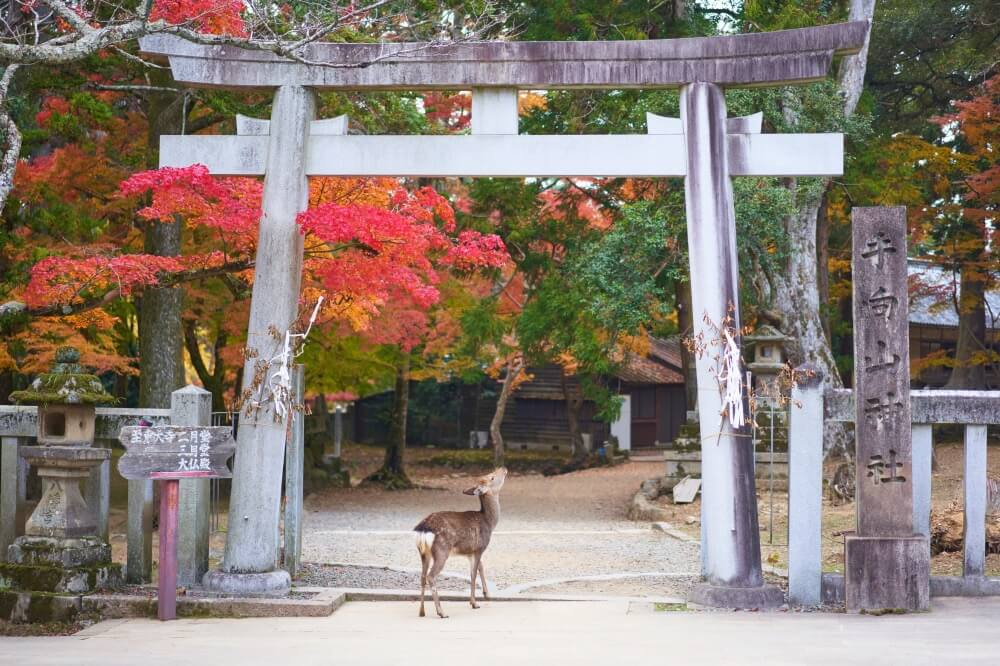 Deer Japan Autumn