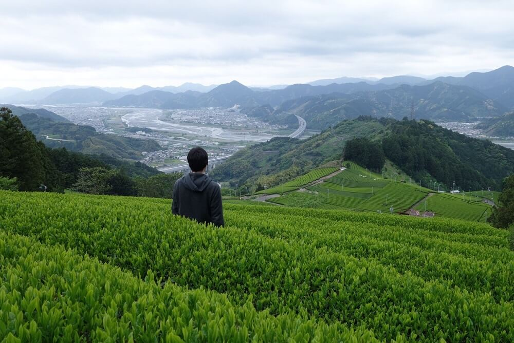 Tea Cup Trip, Mountain fields