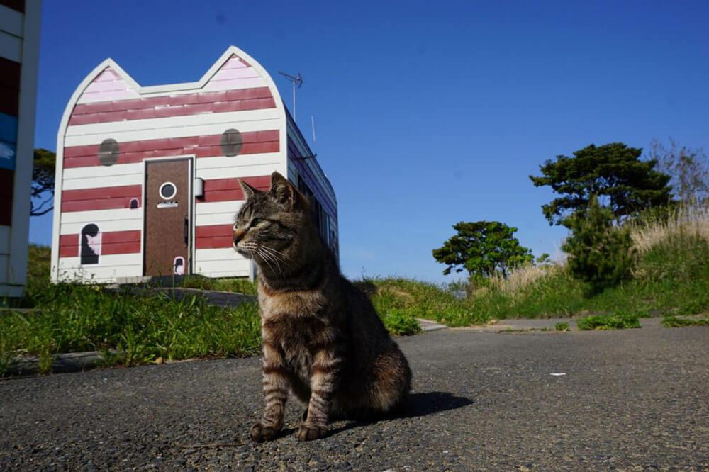 Cat island Japan Miyagi