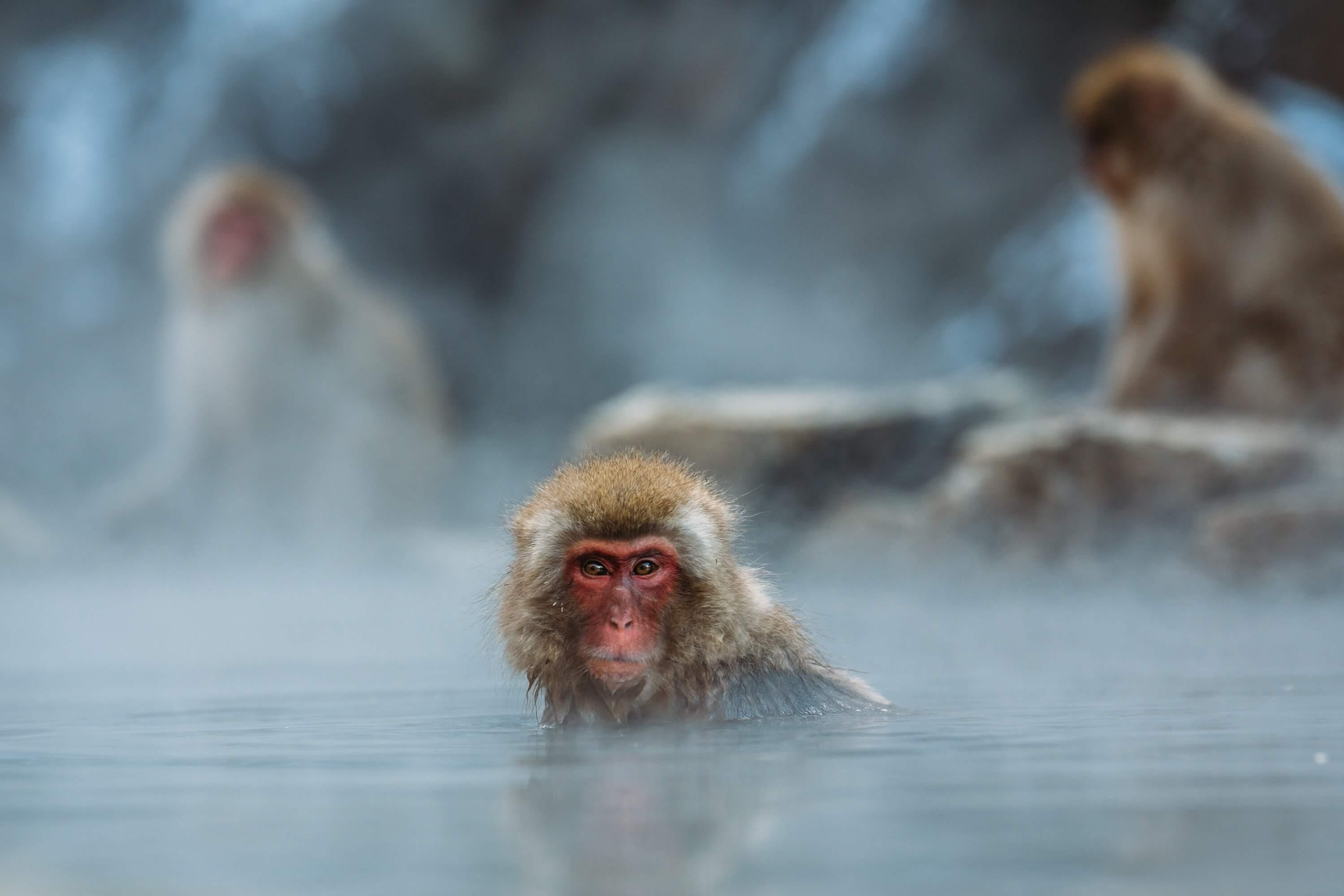 Monkey Nagano